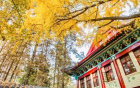 江苏省比较认可的师范类学校-最吃香的三个师范专业