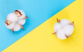 新疆棉花事件作文素材600字:题目、感想、考点、考题(地理、政治、英语)